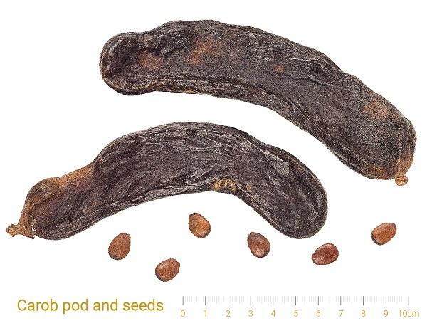 carab seeds